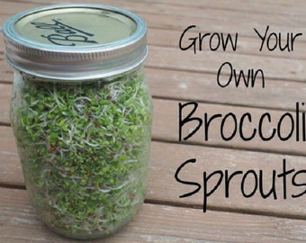 Broccoli sprout seeds,Sprouting,Mico Green, Excellent for freezing.