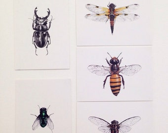 Illustrated insect postcards- pack of 5