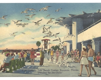 Famous Lido Beach Casino, Sarasota, Florida, Feeding the Sea-Gulls  1954 Postcard