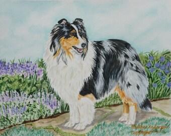 "Me4rle Sheltie Art Print ""Lavender Path"" 8""x10"" Heather Anderson animal artist"