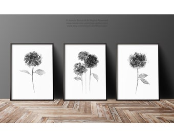 Hydrangea Gray Flower Black White Horensia Drawing Minimalist Art Print, set 3 Flowers Modern Wall Decor, Floral Illustration Home Painting