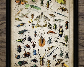 Vintage Insect Print - Insect Illustration - Entomology - Insect Science - Printable Art - Single Print #696 - INSTANT DOWNLOAD