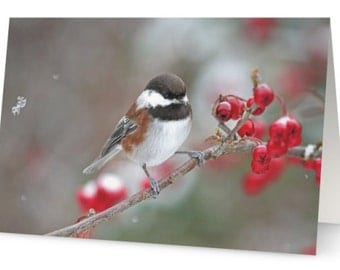 10 Xmas Cards, Christmas Cards Set, Christmas Card Photo, Chickadees, Winter Birds, Red Berries, Nature Photography, Bird Photography