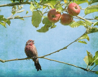 Bird Print, Bird Photography, Bird Art Print, Apple Tree, Bird Photography, Finch, Singing Bird, Blue and Red Art, Watercolor, Autumn Photo