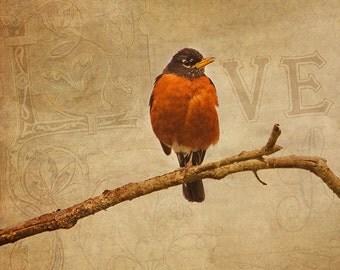 Robin Bird Print, Mothers Day Gift, Love Print, Girlfriend Gift,  Gift for Her, Bird Photography, American Robin, Bird Photos, Bird Prints