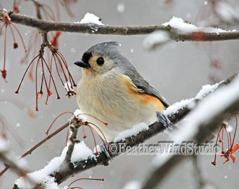 Tufted Titmouse Photo | Grey Winter Bird and Snow Photography | Baeolophus bicolor | Nature Home Cabin Art Decor | Feather Wind Studio Print