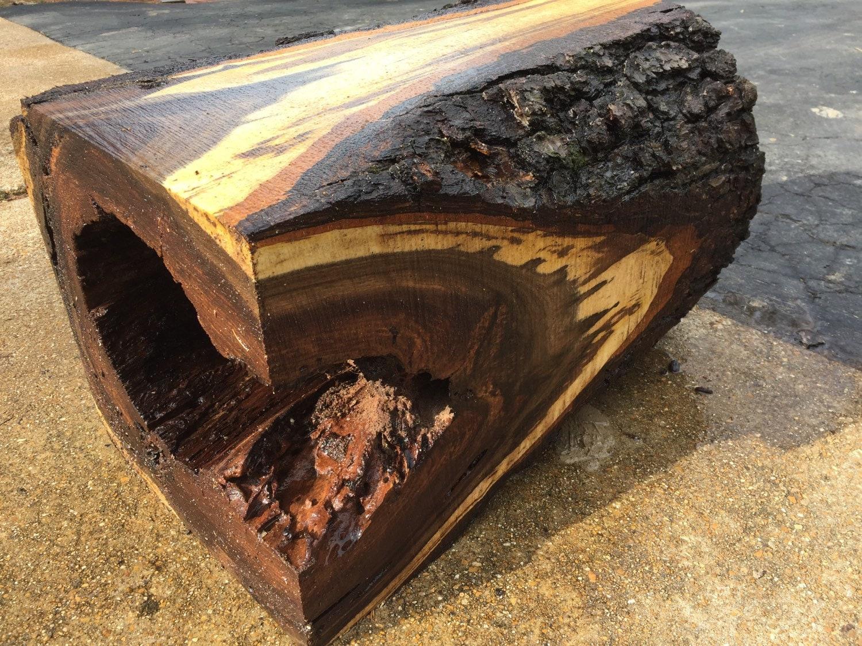 Black Walnut Natural Edge Tree Trunk Diy By