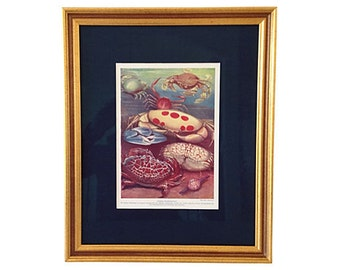 Framed Antique Crabs Lithograph