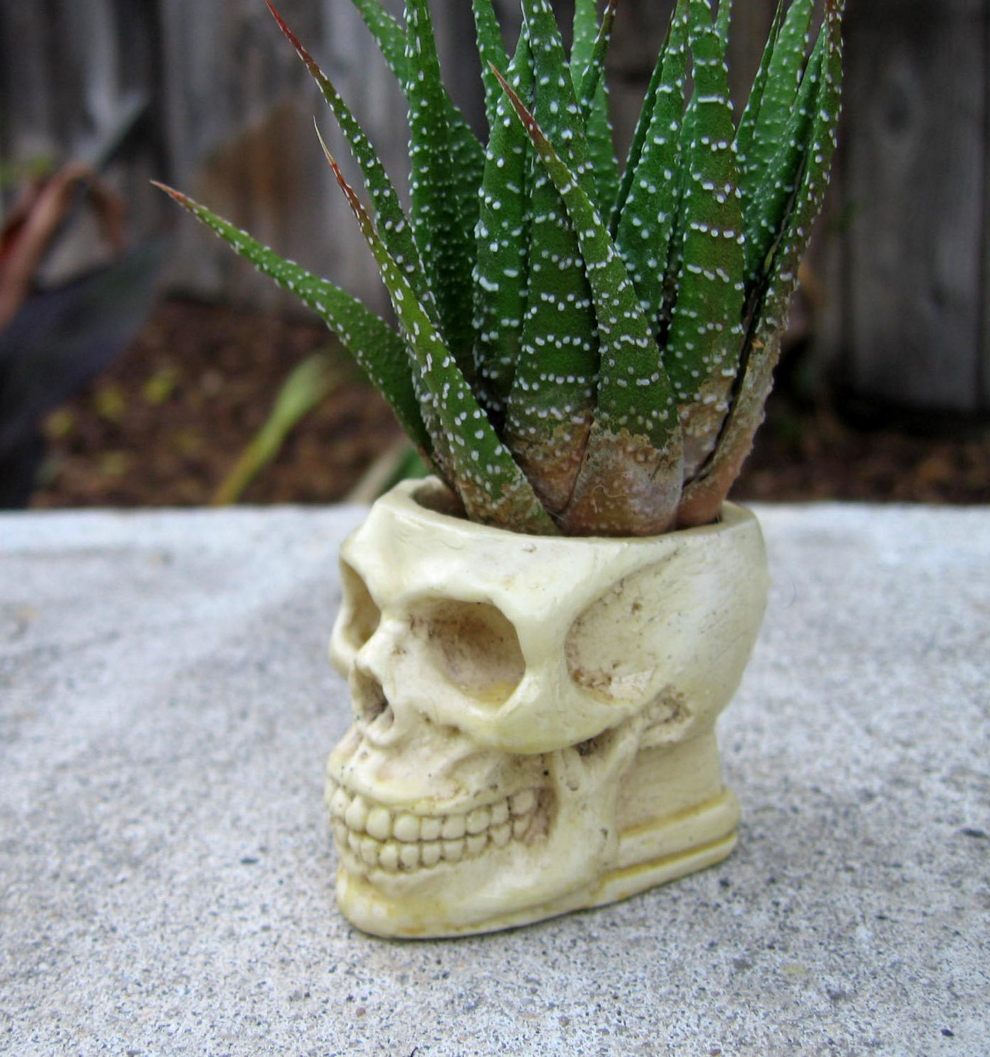Skull Succulent Planter Bone Color Skull Pot Casting Stone