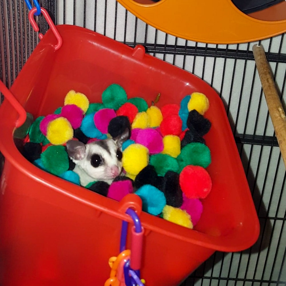 Toys For Sugar : Sugar glider toy double trouble ball pit box