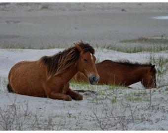 Shacklford Ponies Resting