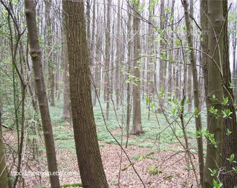 Woodland photograph, 11x14 picture Halle Forest Brussels Belgium, 8x10 green brown nature fine art photograph, travel wall art Earth Day