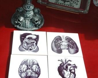 Vintage Organs Ceramic Printed Coasters ~Anatomy~Dr. Gift~Dark Decor