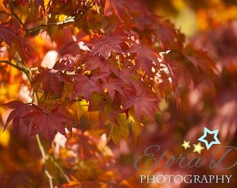 Autumn Leaves Fine Art Photograph Print Wall Decor