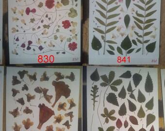 Pressed leaves, pressed petals, pressed plants, oshibana supplies. #830 #841 #754 #725