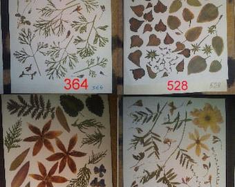 Pressed flowers, dried flowers, pressed leaves, dried leaves, pressed petals, dried petals, Oshibana supplies #364 #528 #285 #365