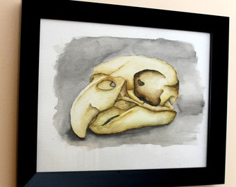 Original Water Colour Bird Skull & Black Frame