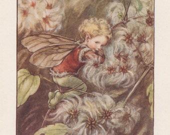 Flower Fairies: The OLD-MAN'S-BEARD  Fairy Vintage Print c1930 by Cicely Mary Barker