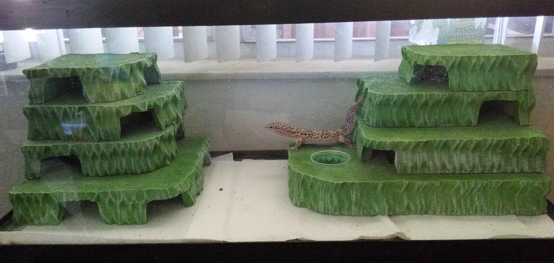 Leopard gecko habitat vivarium decor herphomes 20 by herphomes for Decoration habitat
