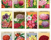 12 French Labels Vintage Flower Seed Packet Digital Download Collage Sheet Seed labels Flowers Decoupage Scrapbooking