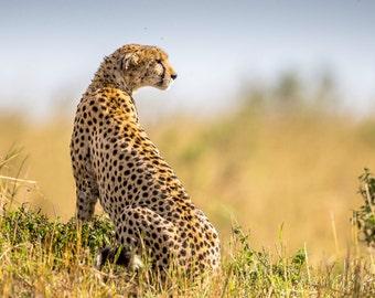 Cheetah, Cheetah Picture, Cheetah Photo, Cheetah Print, Maasai Mara, Wild Cat, Big Cat, Hunter Picture, Hunter Photo, African Art, Gepard