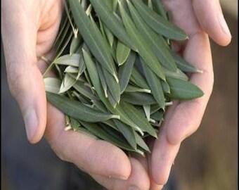 TEA Olive Tree Leaves, Greek, Dried, Organic