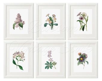 Botanical Printable Set, Flowers, Purple, Lilac, Violet INSTANT DOWNLOAD Digital Illustrations for Print 5x7, 8x10, 11x14 Included - 1531