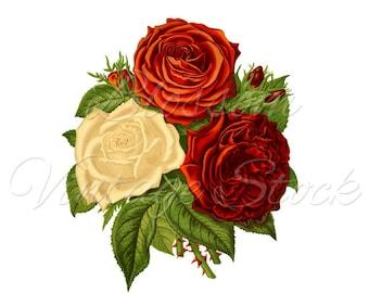 Red ROSES Digital Image Botanical Prints - INSTANT DOWNLOAD, Roses Clipart, Printables - 1763