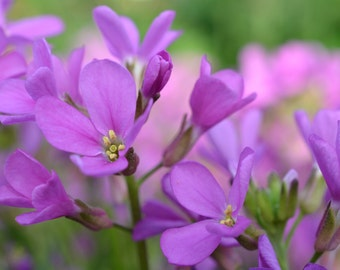 Lovely Purple Flowers Image #238