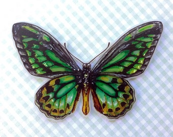 Birdwing Butterfly Brooch