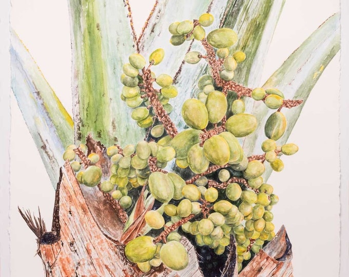 Edwina Nelson, Mexican Blue Palm (fruit), 2016