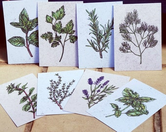 8 Postcards of Herb Illustrations (Basil, Lavender, Mint, Rosemary, Parsley, Oregano, Thyme, Dill)