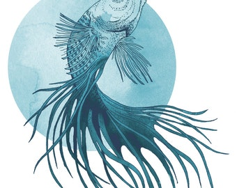 Blue Siamese Fighting Fish Print from ink drawing & watercolour original - A3
