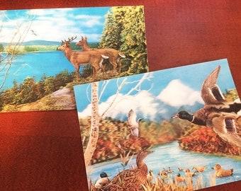 2 3D Wildlife Postcards circa 1970 - Ducks Deer Woodland