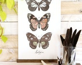 Lepidoptera Vol.1 - large wall hanging, wood trim and printed on textured cotton canvas. Vintage Science Posters