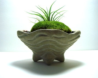 SALE! Abstract Primitive Concrete Bowl Planter with Moss Air Plant Centerpiece