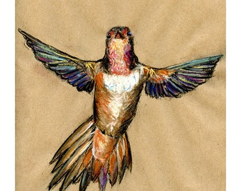 hummingbird 8X10 or 9X12 print - bird art mixed media drawing