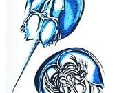 Horseshoe Crab Watercolor...