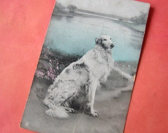 Antique borzoi postcard, Vintage borzoi postcard, Russian wolfhound, Sighthound, antique dog postcard