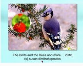 Last one 2016 monthly wall calendar, The Birds and the Bees, birds, bees, nature, bluejay, butterfly, free shipping to Canada!
