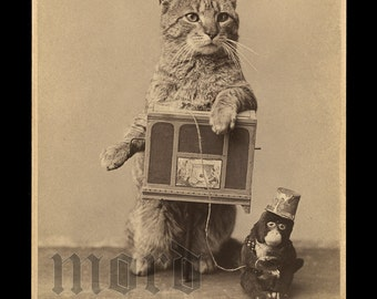 RARE & Wonderful Antique Photograph ~ Organ Grinder Cat!
