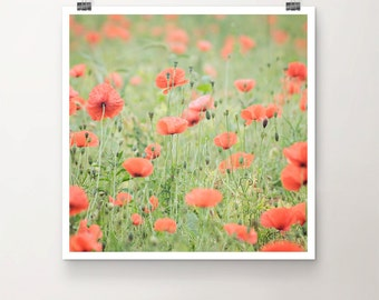 Poppy Colony - Fine Art Print Poppies Flower Field Nature Photography Photo Summer green red bloom blossom grass