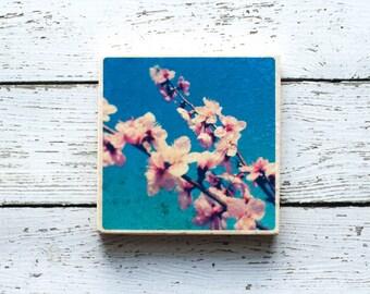 Peach Tree Flower Coasters, Original Photography Coasters, Flower Photo, North Fork Long Island, The Hamptons, Long Island NY, Pink Tree