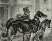 Sighthound Lurcher Saluki Dog Antique Print 1870s Aldine Art Journal Black White Dog Art Wall Decor