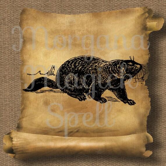 Vintage Groundhog Royalty Free Clipart
