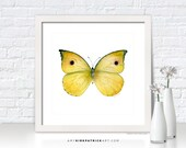 Yellow Butterfly Painting, Butterfly Print, Original Butterfly Watercolor, Butterfly Greeting Cards, Butterfly Wall Art, 32 Dercas Lycorias