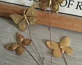 Florist Butterflies  (1 pc)
