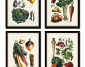 French Vegetable Print Set, Collage, Art, Illustration, Botanical Prints, Art Print, Wall Art, French Style Decor,Kitchen Art, Vegetables