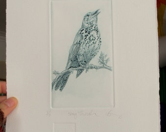 Bird print drypoint.  Fine art Song Thrush. Hand pulled print.