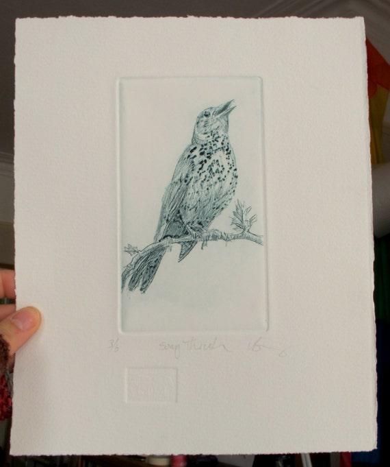 Bird print drypoint.  Fine art Song Thrush. Hand pulled print.